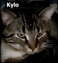 <b>Creature Feature:</b> Kylo loves kids