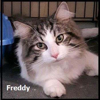 FreddySept16