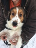 <b>Creature Feature:</b> Lassie wants to come home