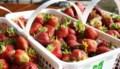 <b>Outdoors:</b> Thomson Strawberry Farm