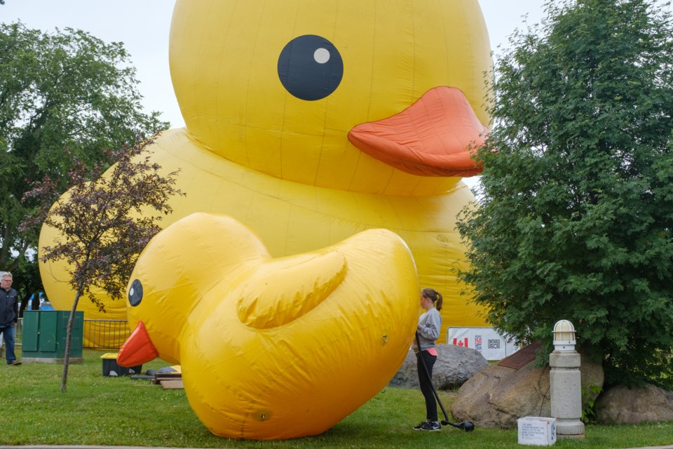 The World\'s Largest Rubber Duck cost $120k to rent — was it worth it ...