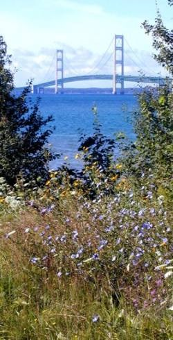 MackinacBridgeFlowers