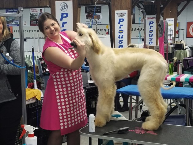 These dogs get groomed to do stuff. For ribbons (8 photos)