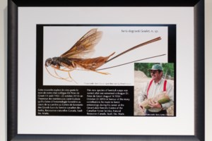 Great Lakes Forestry Centre entomologist receives fitting posthumous honour