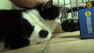 VIDEO: Pets we've met - Susie