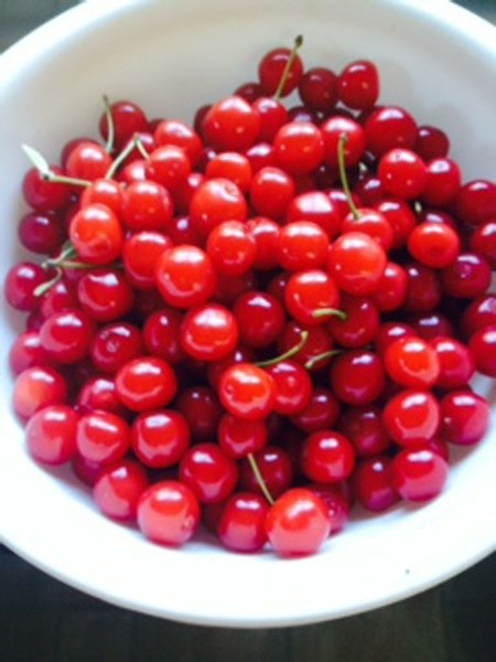 EVANS CHERRY – The fact that these cherries grow in almost every back yard is due almost entirely to the work of provincial agriculture pathologist