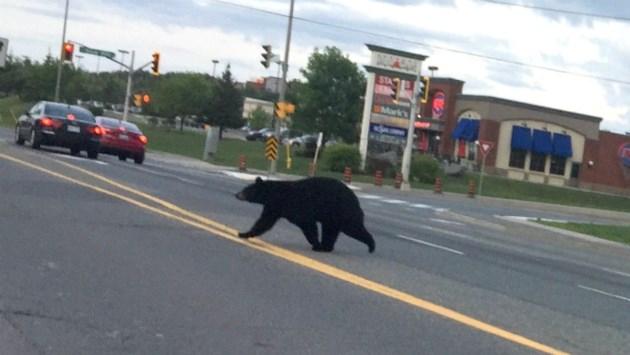 100818_DM_bears