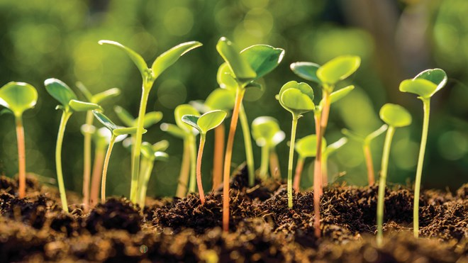 gardening sprouts seedlings spring springtime green growth