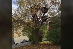 Friday fun: Fruit 'bearing' tree video goes viral