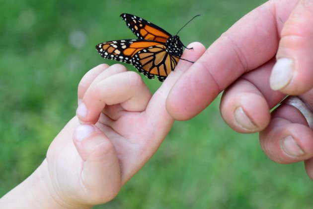 77e0ac972 Photo: Poignant photo captures the spirit of the butterfly release ...
