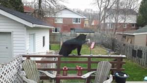 <b>Video: Bear cub helps himself to bird feeder</b>