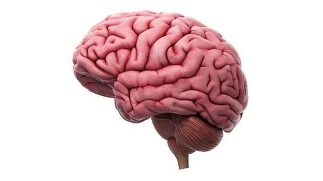 BrainConcussionSized