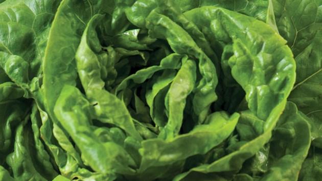 LettuceSized