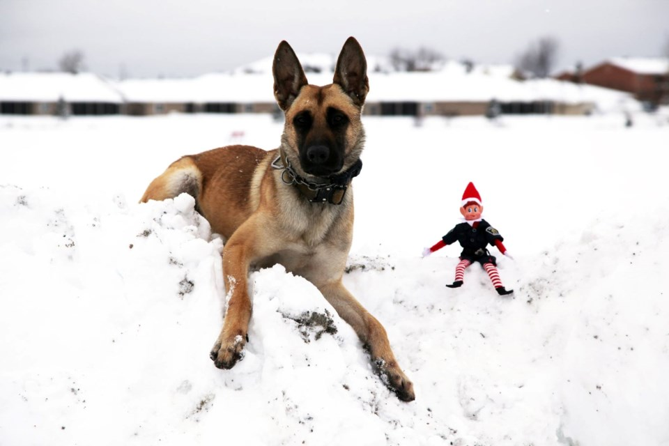 Leo the police dog is Greater Sudbury Police's newest member. He's seen here with Const. Nickel, the police service's Elf on the Shelf. Let's hope he doesn't mistake Const. Nickel for a chew toy. (Supplied/GSPS)