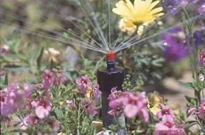 garden_watering_290