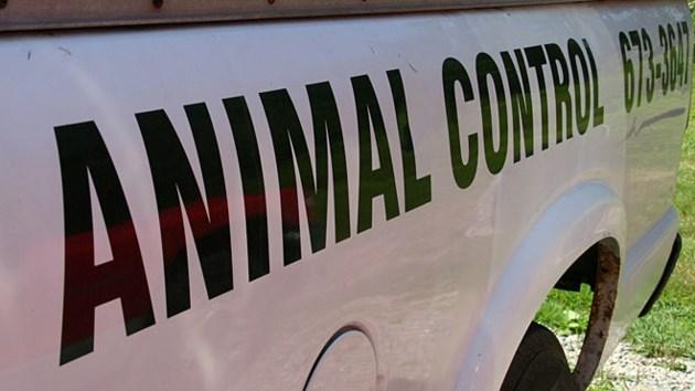 240614_animal_control