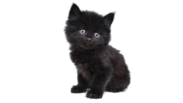 170216_kitty-kat