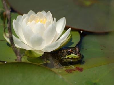 Photo Frog Days Of Summer Sudbury