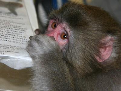 101212_jj_monkey_11