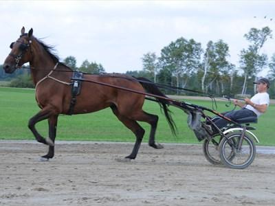 270812_MS_Horse_Race_1