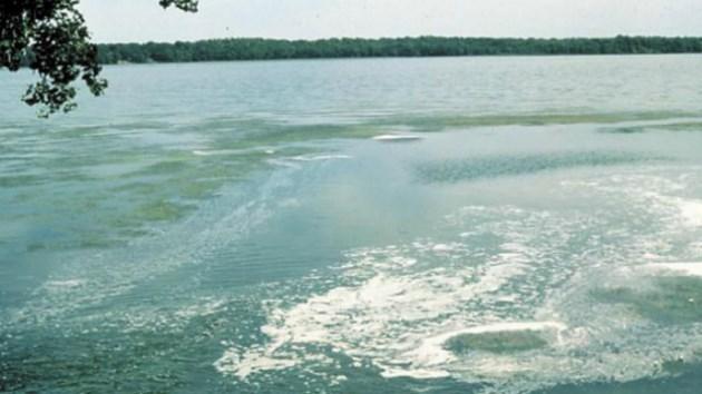 Blue-green algal blooms in Lake Nipissing: Health unit ...