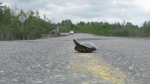 170614_turtle_season