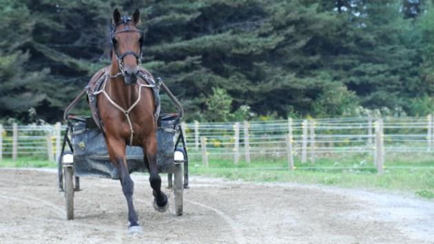 270812_MS_Horse_Race_3