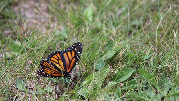 280814_butterfly(1)