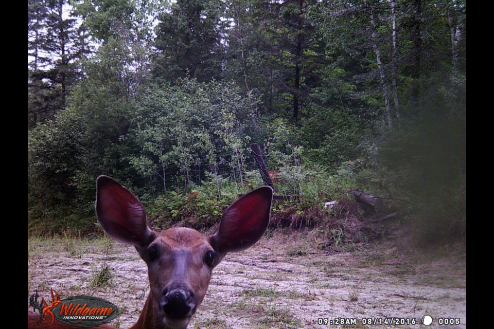 20 Best Trail Cameras of 2019 (Ranked & Reviews ...