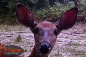 Estaire deer loves a good trail cam selfie
