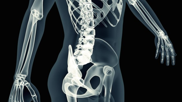 xray-body-scan-skeleton