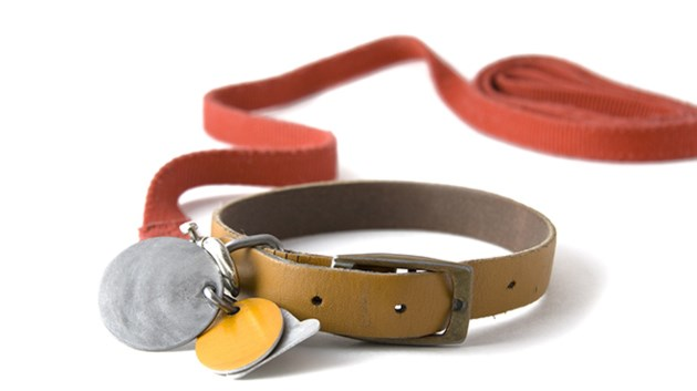 140419_KF_dog_collar_sized