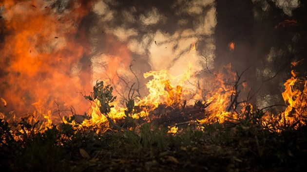 060719_KF_forest_fire_sized
