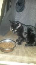 FOUND: Tuxedo kitten, Female!
