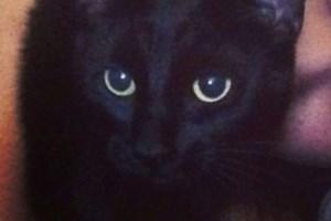 LOST CAT: Kakabeka Falls Area