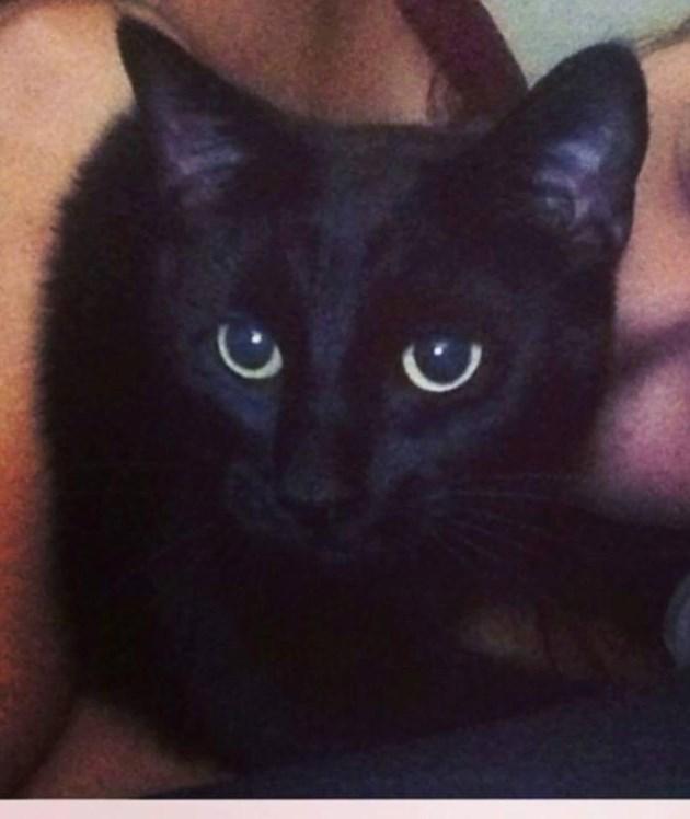 Kitty Boo