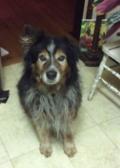 Lost dog: Willie