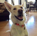 Adopt Me: Remi is great with children