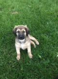 Adopt Me: Sable loves to play outside