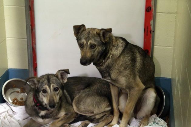 Dog Rescue 3