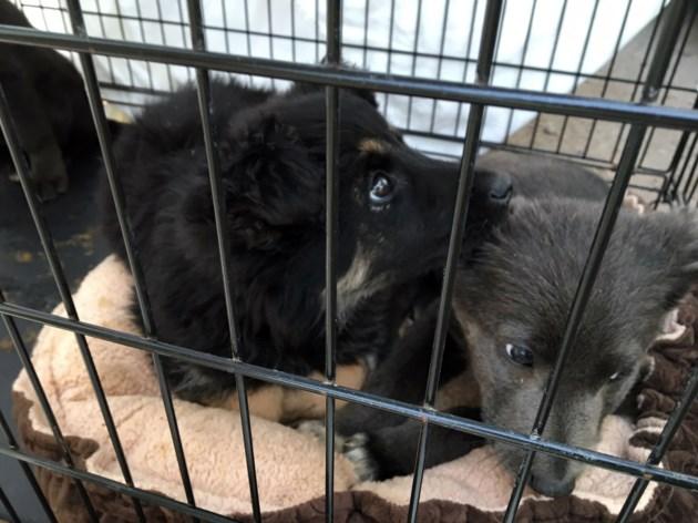 Dog rescue 4