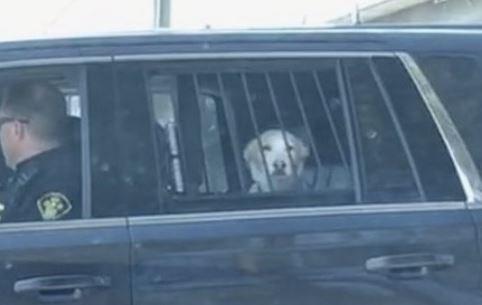 """Finn"" in protective custody of the OPP."