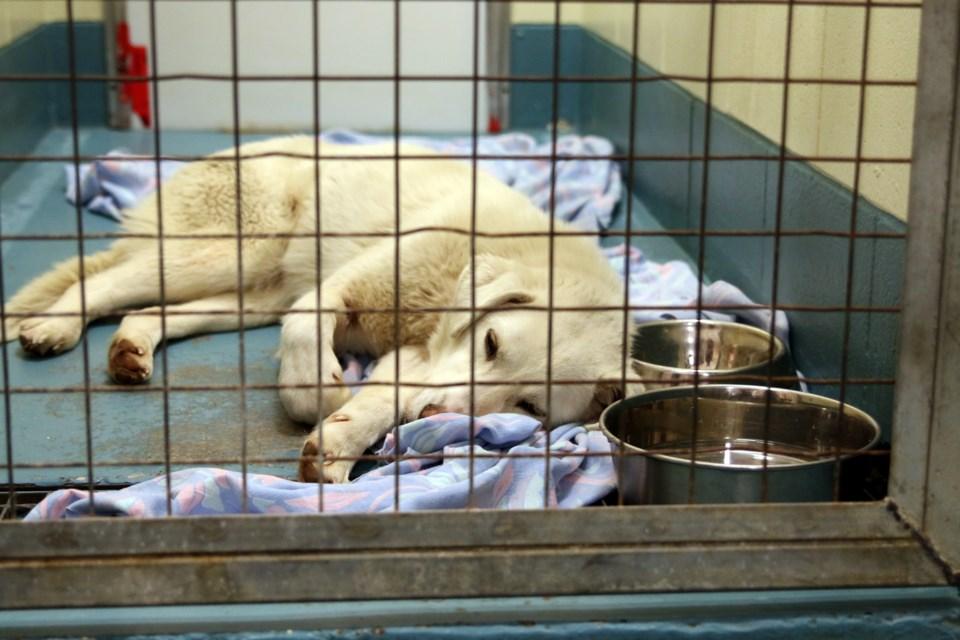 Rescue Dogs In Winnipeg