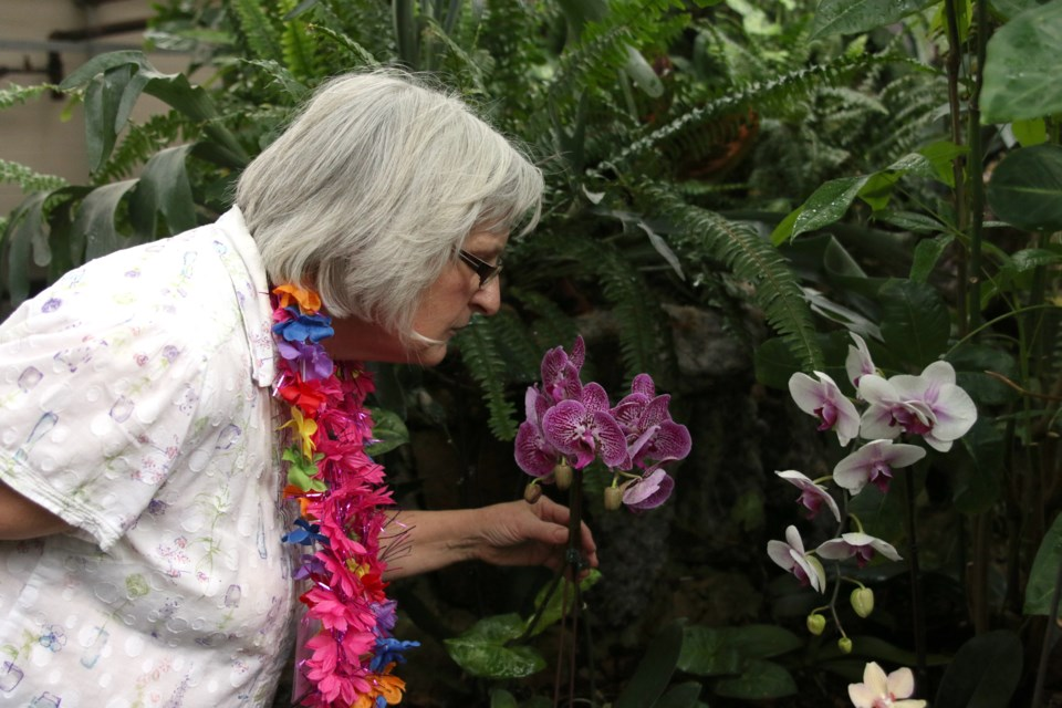 Marilyn Stinson, volunteer coordinator with the Friends of the Thunder Bay Conservatory, enjoys some tropical aromas during an Afternoon in the Tropics on Sunday.