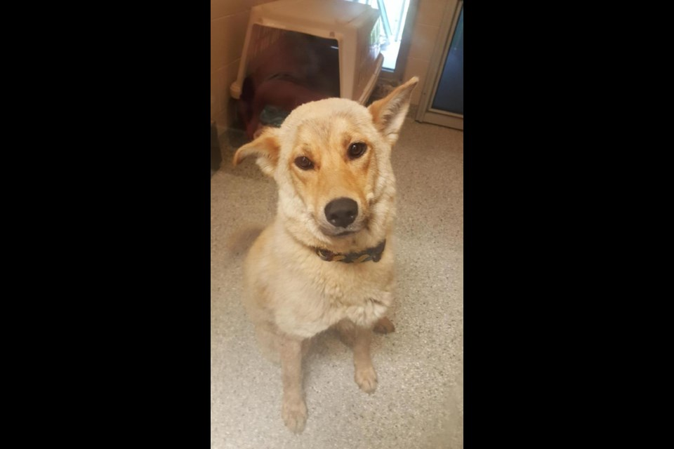 Dog Rescue Northerna Ca