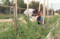 Community garden provides skills and nutrients