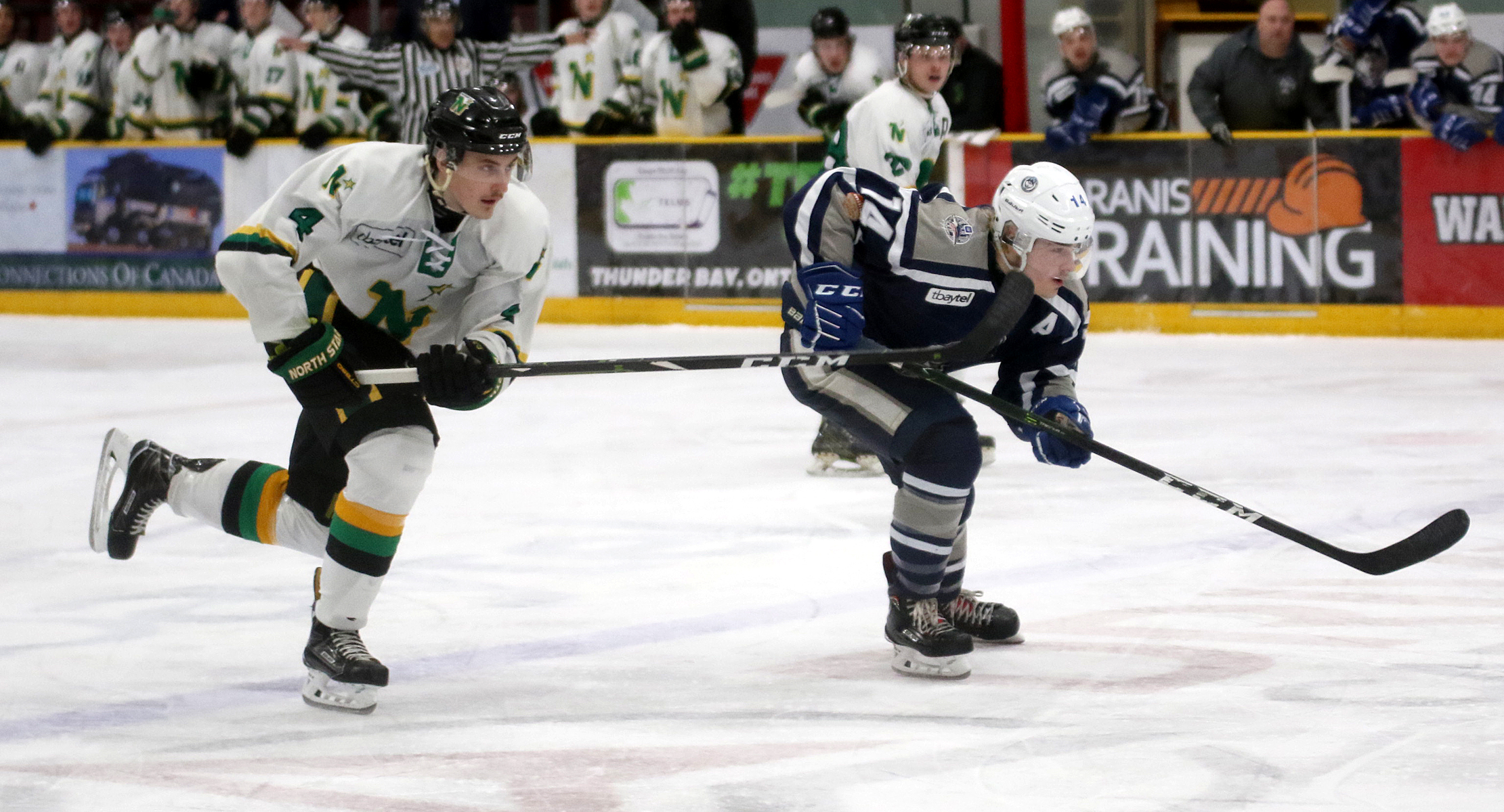 Stars Halushak signs with OHL Greyhounds