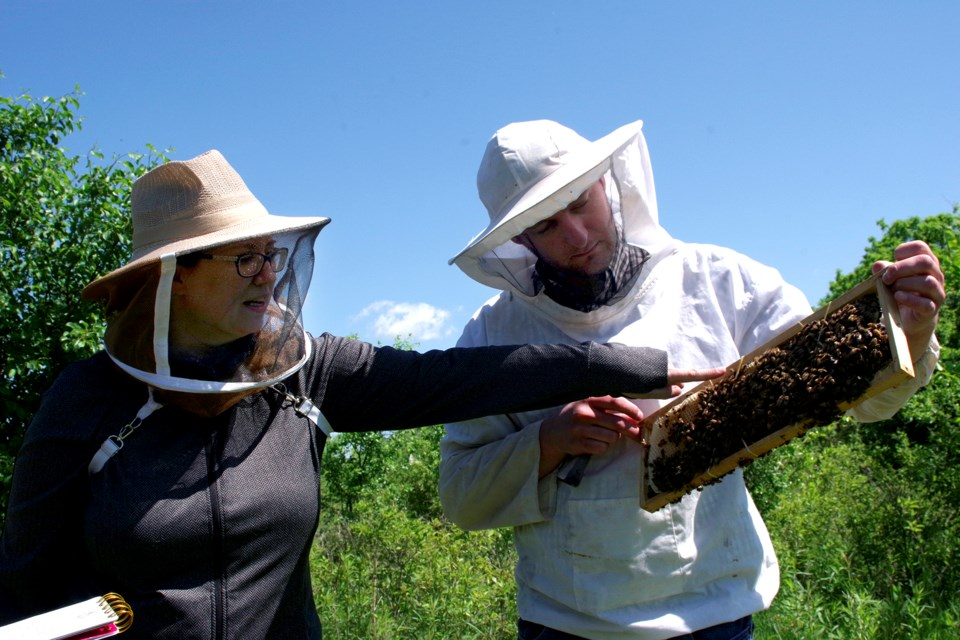 Beekeepers Ken and Shaunna MacQuarrie inspect their hives regularly. Bob Liddycoat / Thorold News