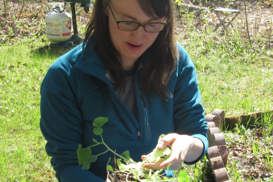Jennifer Nobel, owner of Northbound Bloom, gets a closer look at a seedling she is growing. She hopes to encourage more local residents to grow their own food. Wayne Snider for Timmins Today