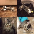 <b>Adopt Me:</b> Don't let Ariel's disability fool you. She's a cuddly, playful firecracker